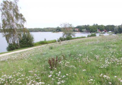 Beim Hügel am Ufer Drilandsees ist ein neues Lokal geplant.