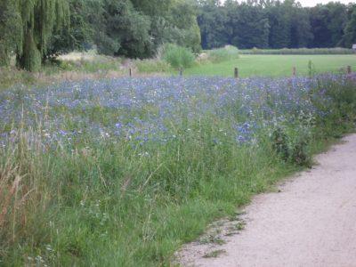Blühwiese neben Futterwiese