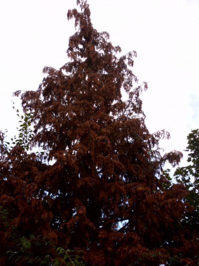 Toter Baum als Folge der Klimakrise.